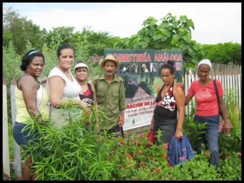 Forestería Analoga en Guantanamo Cuba