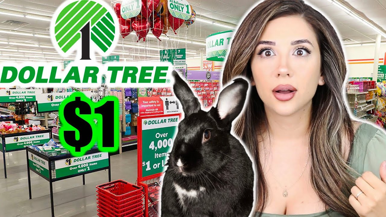 Things You Can Buy at DOLLAR TREE for Rabbits!