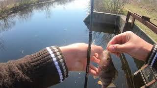 Рыбалка в Ростове-на-Дону ловля окуня на левбердоне