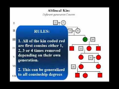 Kinship Relationships: Identification and Classification