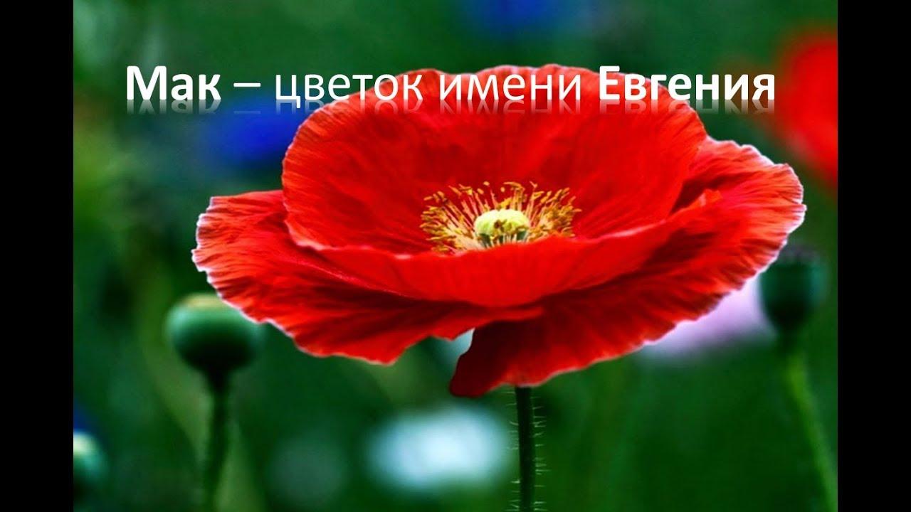 Цветок имени елены