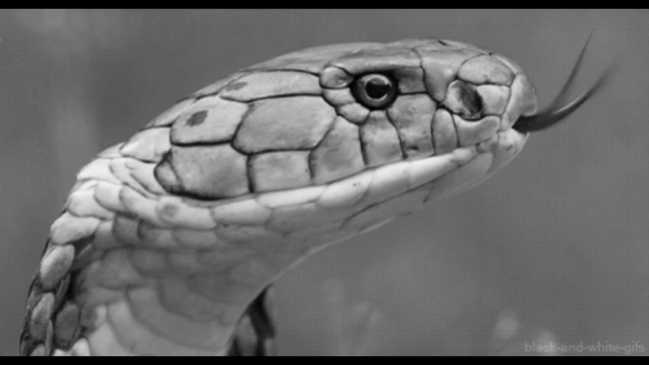 Картинки змей с анимацией, поздравлений
