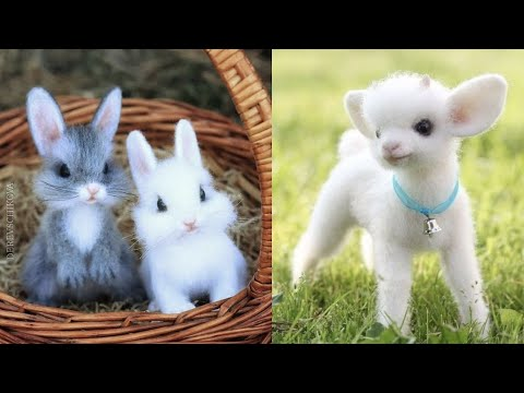 Cutest baby animals Videos Compilation Cute moment of the Animals - Cutest Animals