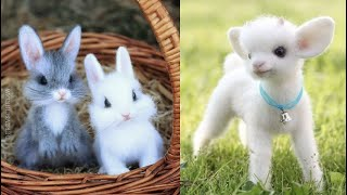 Cutest baby animals Videos Compilation Cute moment of the Animals  Cutest Animals #4