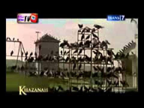 Khazanah (Kecerdasan Burung Gagak dan Simpanse dalam Al-Qur'an)