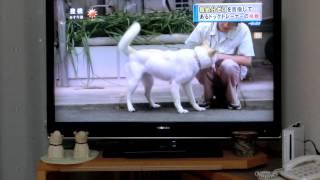 日本では、一日に約787匹の何罪もない犬や猫が殺処分されています。 ...