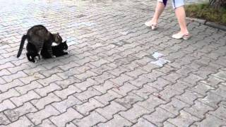 Секс кошек видео.  Sex videos of cats
