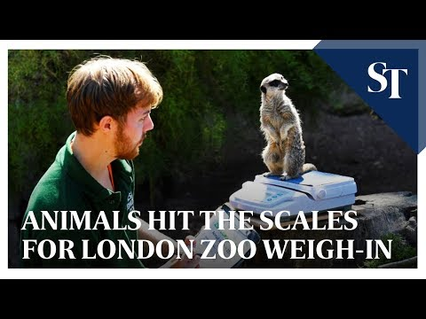 Penguins to porcupines hit the scales for London zoo weigh-in