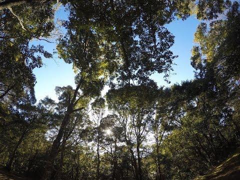 【ソロバイクキャンプ】千葉 内浦山県民の森2泊3日ソロキャンプ 2日目【SOLO CAMPING】