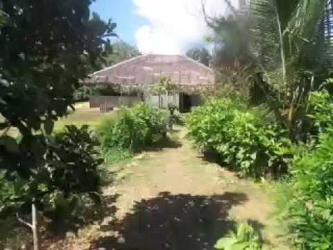 Organic farm Bohol Maribojoc