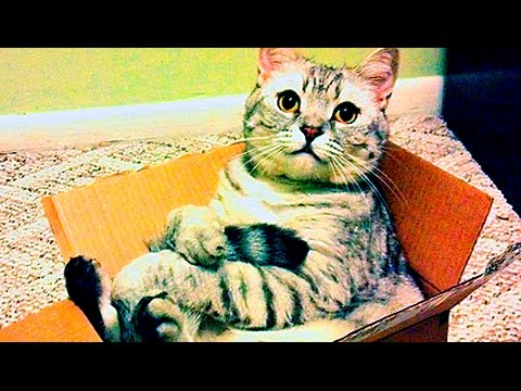 Cat In Boxes Compilation