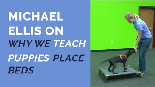 Michael Ellis on Why We Teach Puppies Place Beds