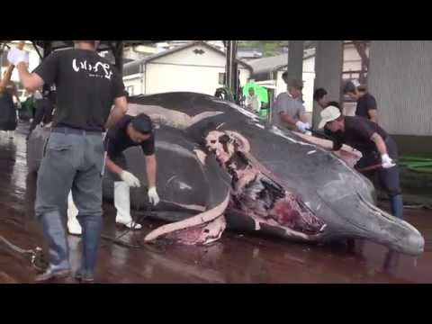 Filleting a whale at Wada fishing port in Japan クジラの解体 和田浦