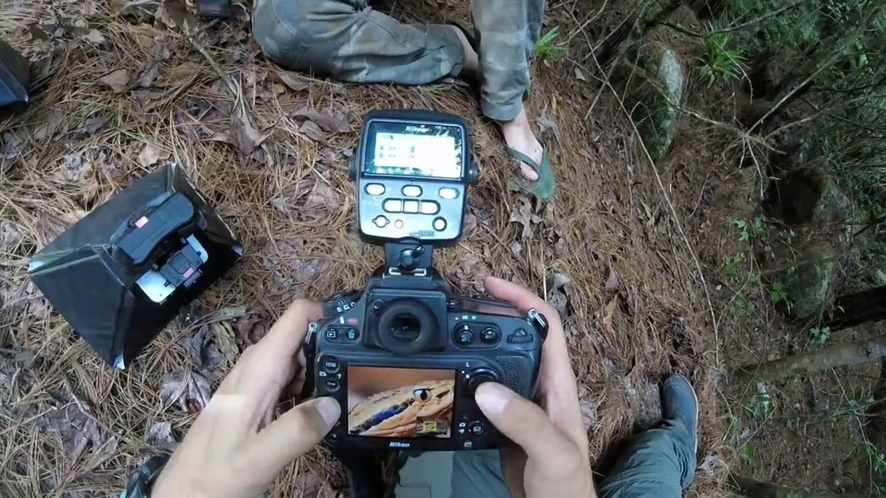 Fauna Nicaragua Expedition [Mogoton, Nicaragua]