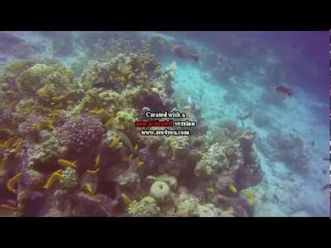 Janvier 2018 Plongée à Hurghada égypte
