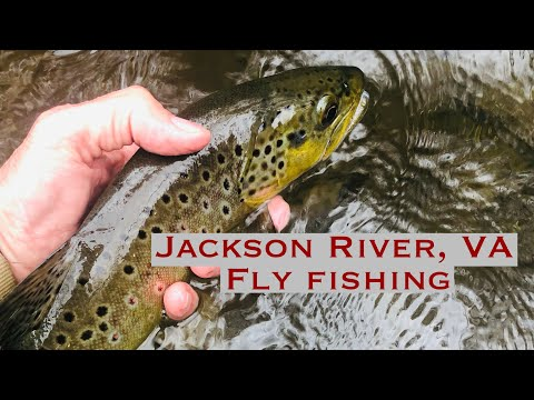Jackson River, VA Fly Fishing