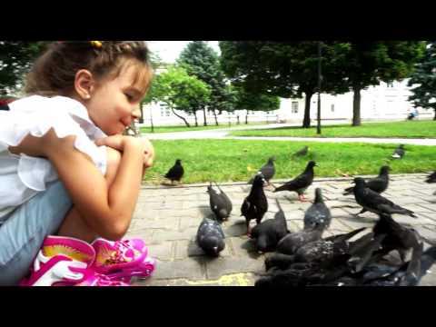София и голуби