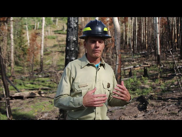 Using the Briggs Fire across the landscape for a healthy forest  - Buy American