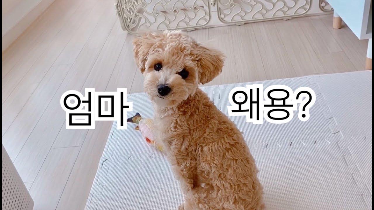 Download 열심히 놀던 강아지, 엄마가 부른다면?!