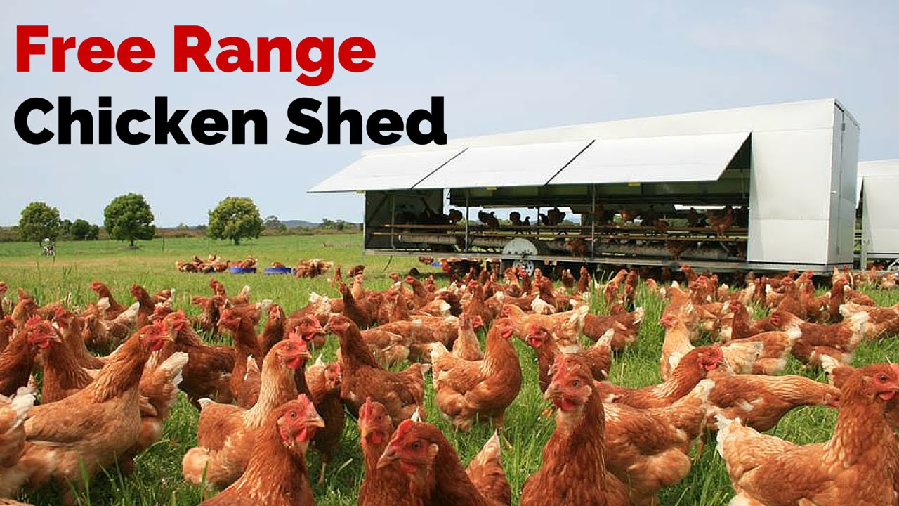 chicken range free So, when you're shopping for chicken, what do labels like free range or pastured really mean which chickens fall in line with everything you want, and which ones do you know you might.