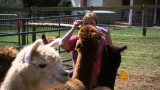 CBS Sunday Morning - Alpacas for fun and profit