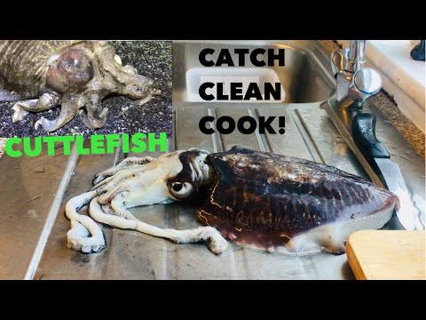 CUTTLEFISH, Catch ,Clean , Cook , Fishing For Squid And Cuttlefish!