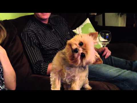 Cute Dog - Turns head for Thanksgiving