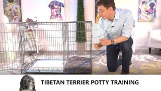 Tibetan Terrier Potty Training from WorldFamous Dog Trainer Zak George  Tibetan Terrier Puppy