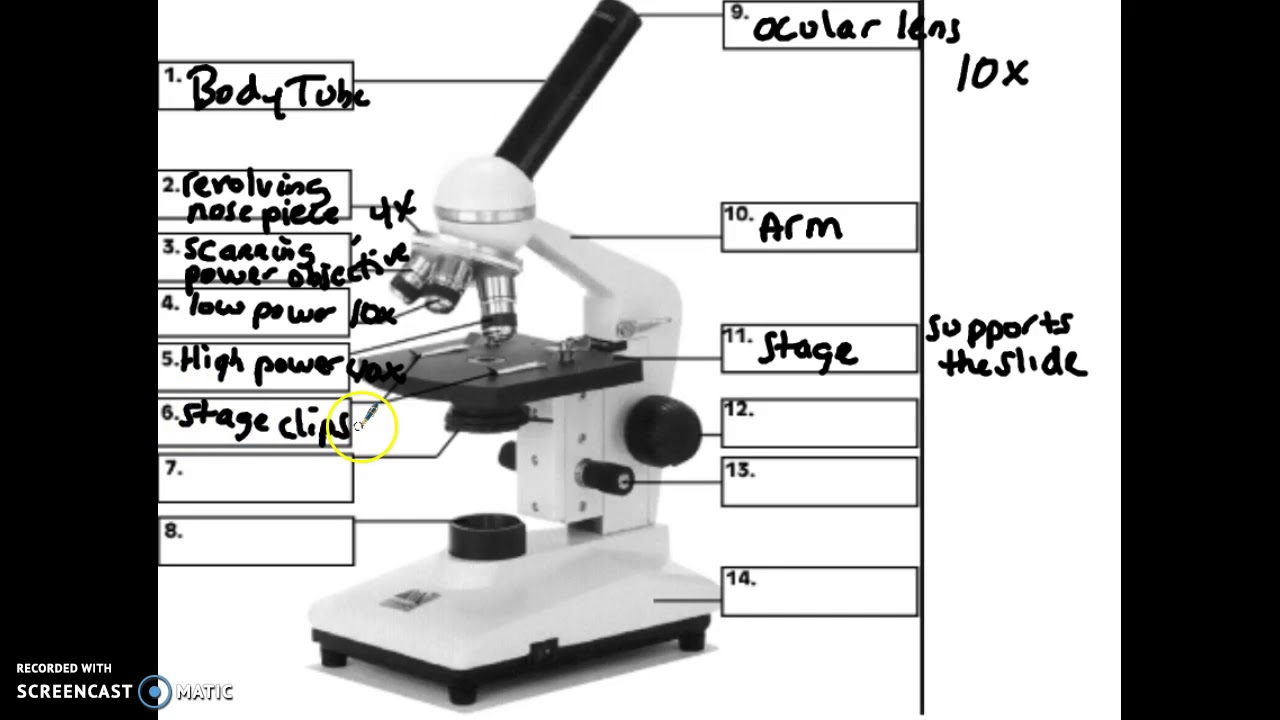 Compound Light Microscopes Parts And Functions