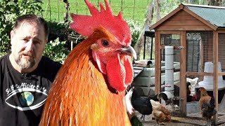 Can You Live off Just Chickens & Vegetable Garden?
