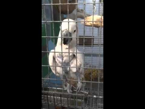 Hamilton Aviary 2