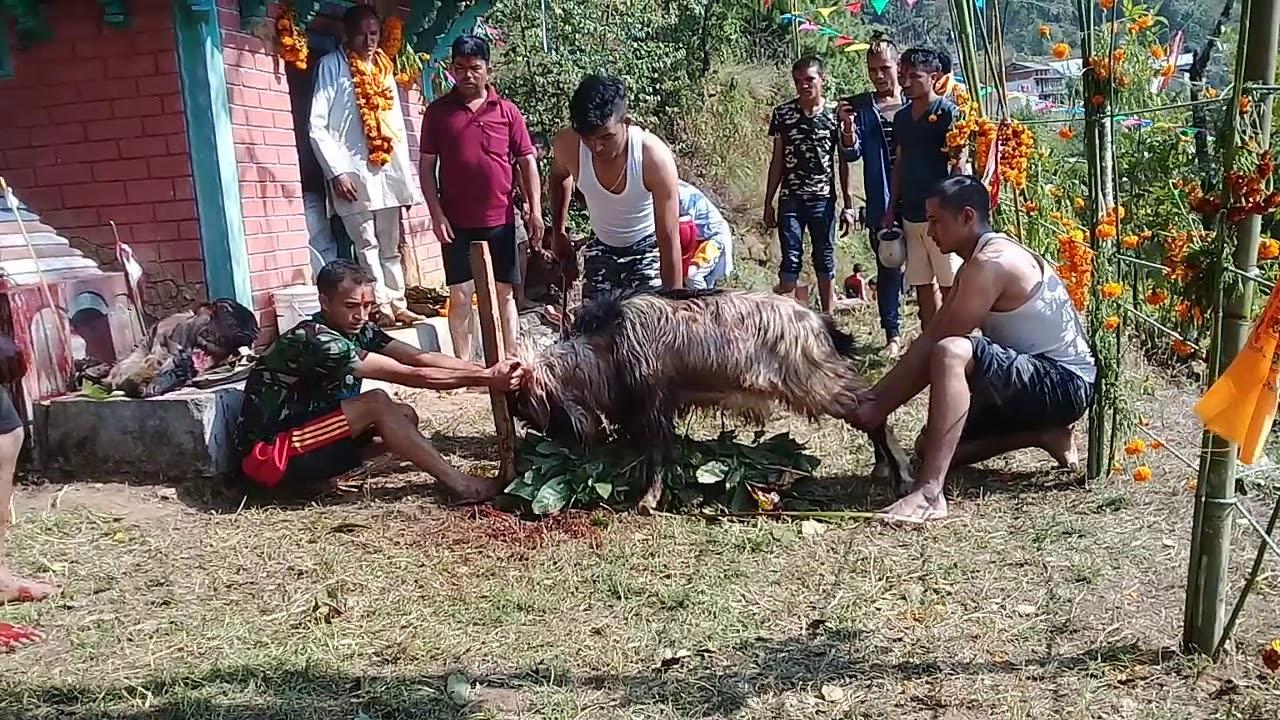 Download Paudel Khatri ko Dewali puja 2075 ma boko puja