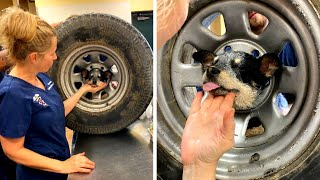 puppy-is-freed-after-getting-head-stuck-in-tire