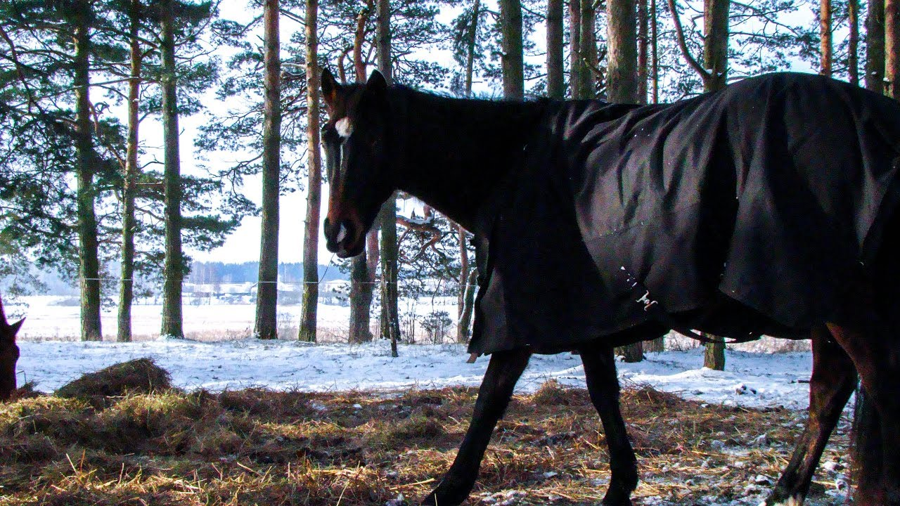 49d6257383 Horse riding training - gallop in snow - YouTube