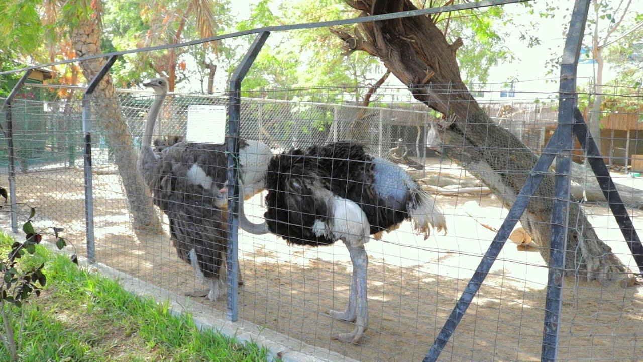 My Dubai A Visit To Dubai Zoo Youtube