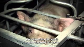 Make it Possible - Wyobraź sobie świat bez hodowli przemysłowych - napisy_pl