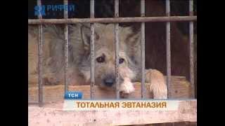 Аукционы краевой ветинспекции на отлов собак поразили жестокостью зоозащитников