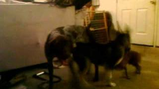 Dog Fight: German vs Russian