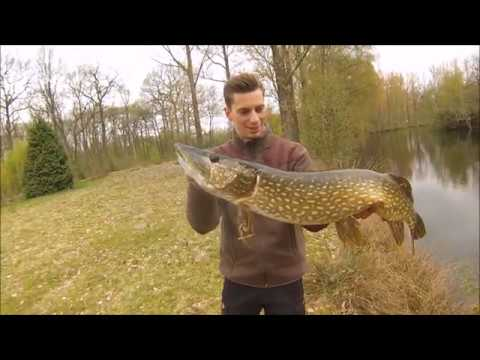 Pike Squad: Hybrid Pike From Savage Gear Keeps Delivering Big Pikes