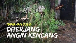 Angin Kencang Terjang Kawasan Stadion Manahan Solo Dua Pohon Tumbang