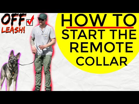 how to use a remote collar to train your dog - Ecollar Dog Training