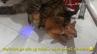 Kucing Homo 😭
