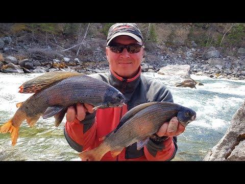 Откуда в этой речушке такие кабаны/Рыбалка в горах-огромный хариус/Жизнь в Сибирской тайге/Кадрин #2