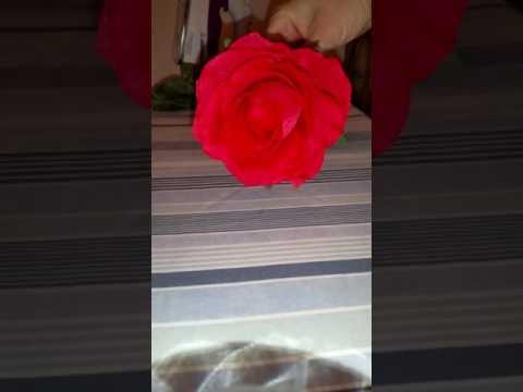 Restore crushed artificial roses