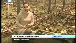В Челнах птицефермы автоматизируются и расширяют производство