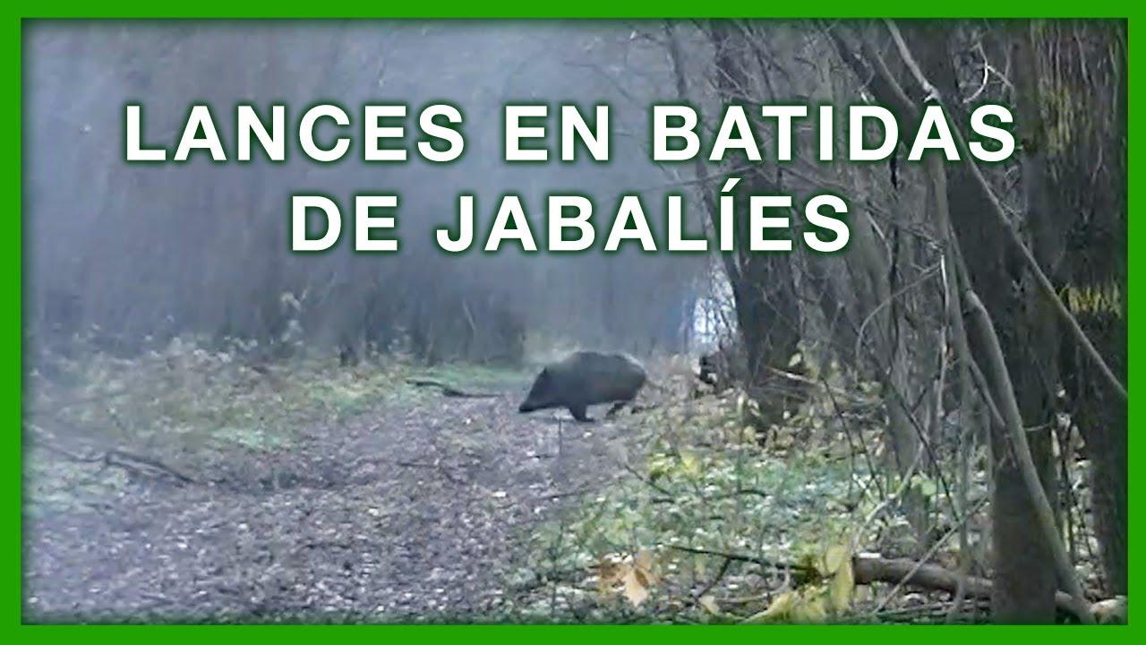 LANCES EN BATIDAS DE JABALIES 💥🐗🐗🐗😱