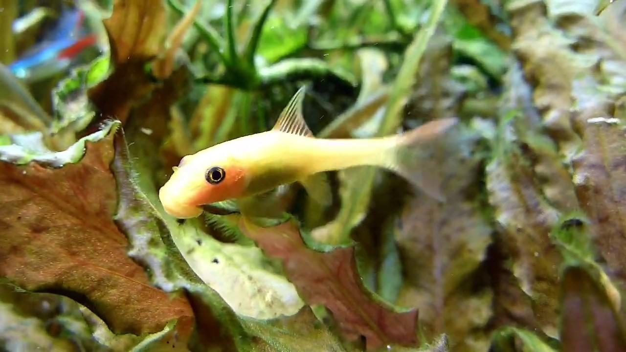 Fischsterben Im Aquarium