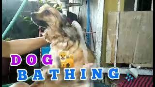 Cute DOG BATHING TIME.    LIGO CHALLENGE