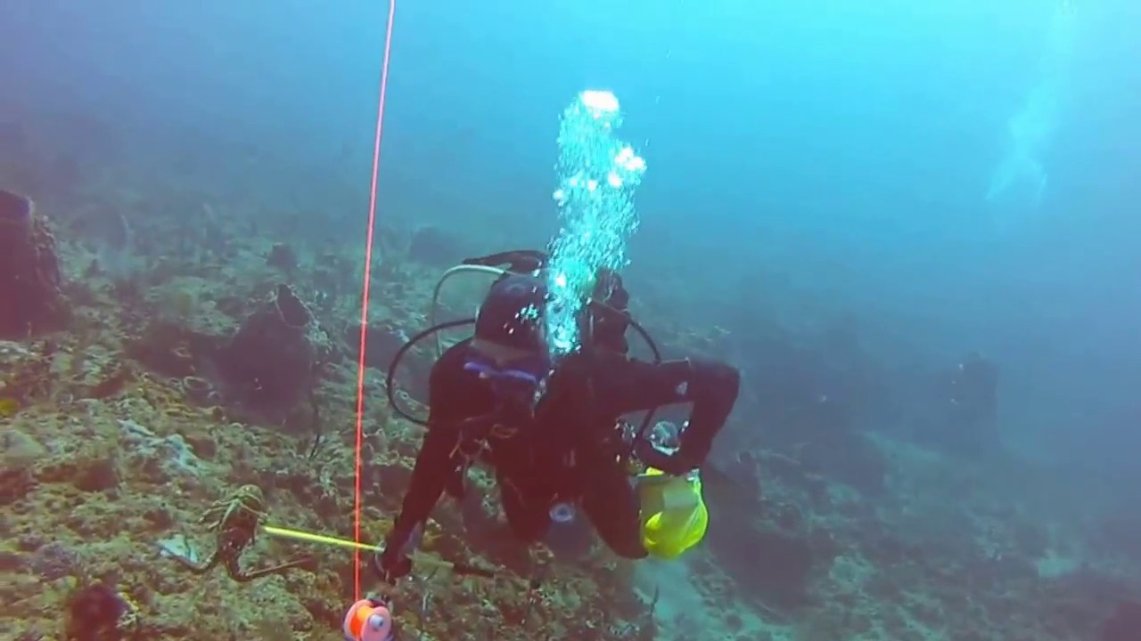 Scuba diving west palm beach breakers reef narcosis youtube scuba diving west palm beach breakers reef narcosis xflitez Images