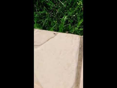 Le voyage d'une fourmie une aventure exceptionnel